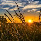 Как открыть сельскохозяйственное предприятие?